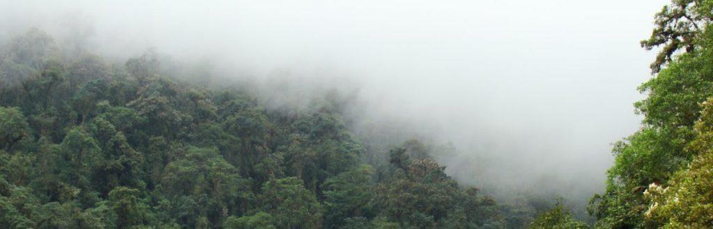 Climate Change, Reforestation, Epiphytes